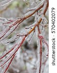frozen plants covered in a...   Shutterstock . vector #570402079