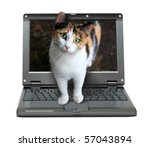 Stock photo small laptop with cat out of screen 57043894