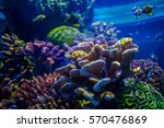 Coral Reef With Clown Fish