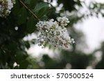flower | Shutterstock . vector #570500524