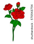 flower rose  red buds and green ... | Shutterstock .eps vector #570543754