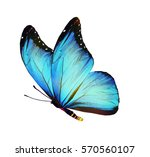 Stock photo color butterfly isolated on white 570560107