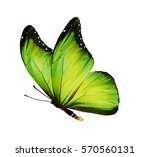 Stock photo color butterfly isolated on white 570560131