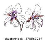 white tropical flower blossom....   Shutterstock . vector #570563269