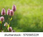 flower in pink | Shutterstock . vector #570585229