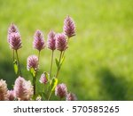 flower in pink | Shutterstock . vector #570585265