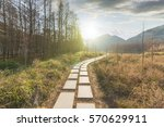 sunset in the woods corridor | Shutterstock . vector #570629911