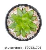 Cactus Plant In Clay Pot Top...