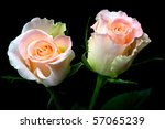Two Delicate Peach Roses With...