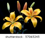 Two Yellow Lilies With Four...