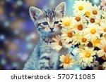 Cute Little Kitten Sitting Nea...