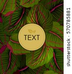 abstract exotic tropical leaf... | Shutterstock .eps vector #570785881