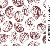 vector seamless walnut pattern... | Shutterstock .eps vector #570862297