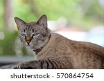 A Cat Is Look Like Annoying