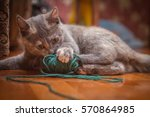 Stock photo the kitten playing with ball of yarn 570864985