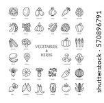 vector line icons with... | Shutterstock .eps vector #570896791