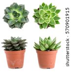 Set Of Pot Plant Echeveria...
