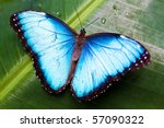 Beautiful Blue Butterfly On A...
