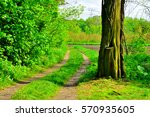 big old tree in the forest and... | Shutterstock . vector #570935605