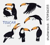 toucan bird color set | Shutterstock .eps vector #570936355
