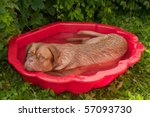 Dog In A Small Pool Tired Of...