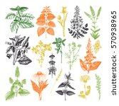 vector collection of hand drawn ... | Shutterstock .eps vector #570938965
