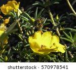 flower and honey bee | Shutterstock . vector #570978541