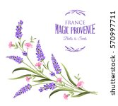 bunch of lavender flowers on a... | Shutterstock .eps vector #570997711