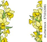 beautiful daffodils. vector...