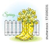 Beautiful Daffodils In Rubber...