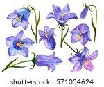 watercolor flower set  hand... | Shutterstock . vector #571054624