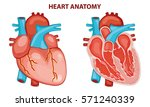 heart anatomy vector... | Shutterstock .eps vector #571240339