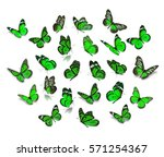Stock photo big set green monarch butterfly isolated on white background 571254367