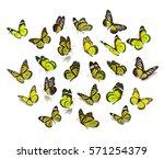 Big Set Yellow Monarch...