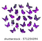 Stock photo big set purple monarch butterfly isolated on white background 571254394