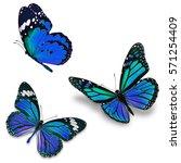 three monarch butterfly ...   Shutterstock . vector #571254409