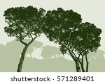 silhouettes of the pine trees | Shutterstock .eps vector #571289401
