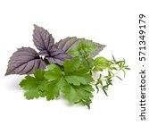 fresh herb leaves variety... | Shutterstock . vector #571349179
