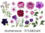 violet flowers set. botanical... | Shutterstock . vector #571382164