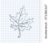 Maple Leaf Sketch. Vector