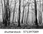 english woodland on a foggy... | Shutterstock . vector #571397089