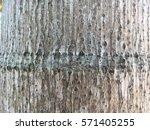 wood texture | Shutterstock . vector #571405255