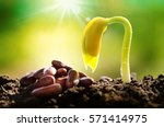 agriculture and new life... | Shutterstock . vector #571414975