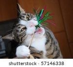 Stock photo crazy cat 57146338