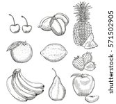 fruits sketch. vector isolated...