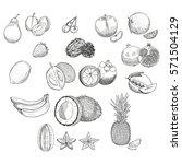 exotic fruits set mangosteen ... | Shutterstock .eps vector #571504129