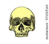 anatomic skull  weathered and...   Shutterstock .eps vector #571529161