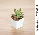 succulent in pot wooden table... | Shutterstock . vector #571542391