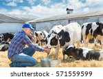 portrait of farmer feeding cows ... | Shutterstock . vector #571559599