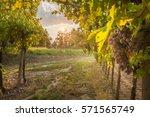 grape harvest | Shutterstock . vector #571565749